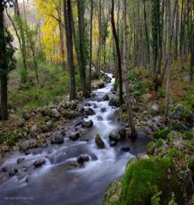 portada el rio magico